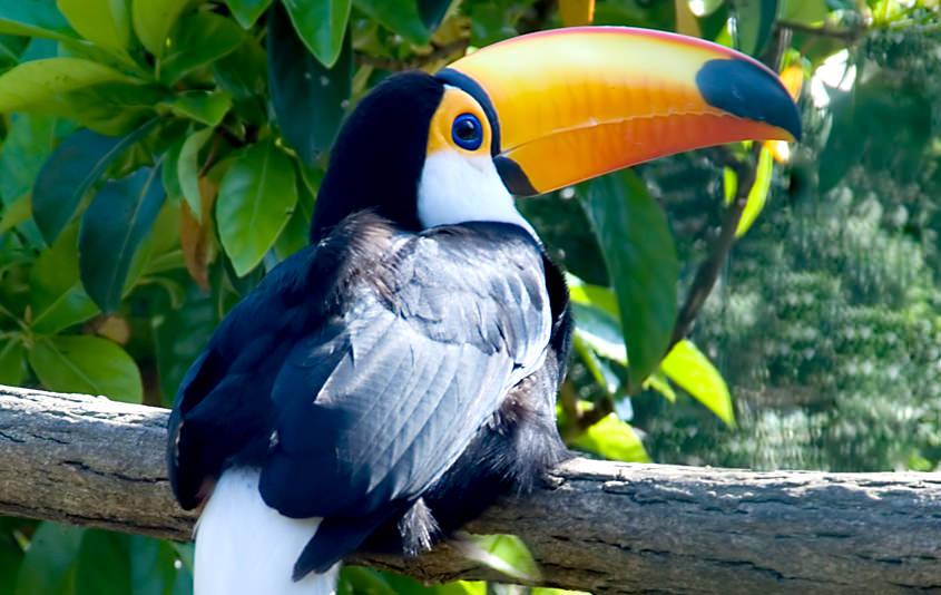 Acerca de Iguazú
